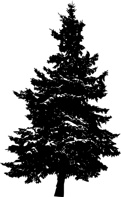 White pine tree white silhouette png. Free images toppng transparent