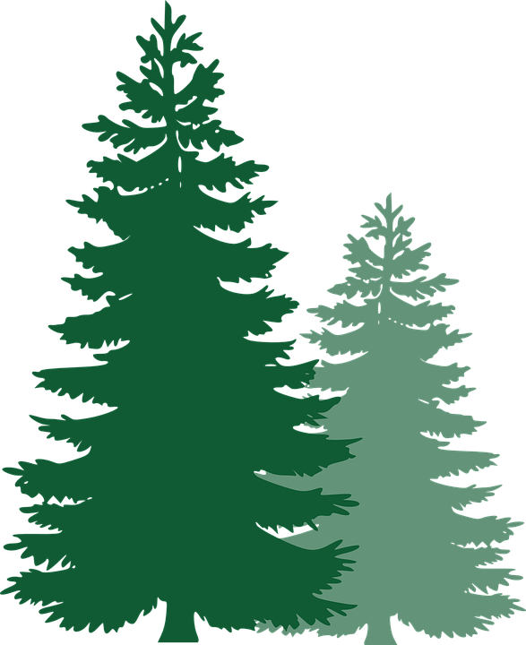Pine tree with frost png. Free image on pixabay