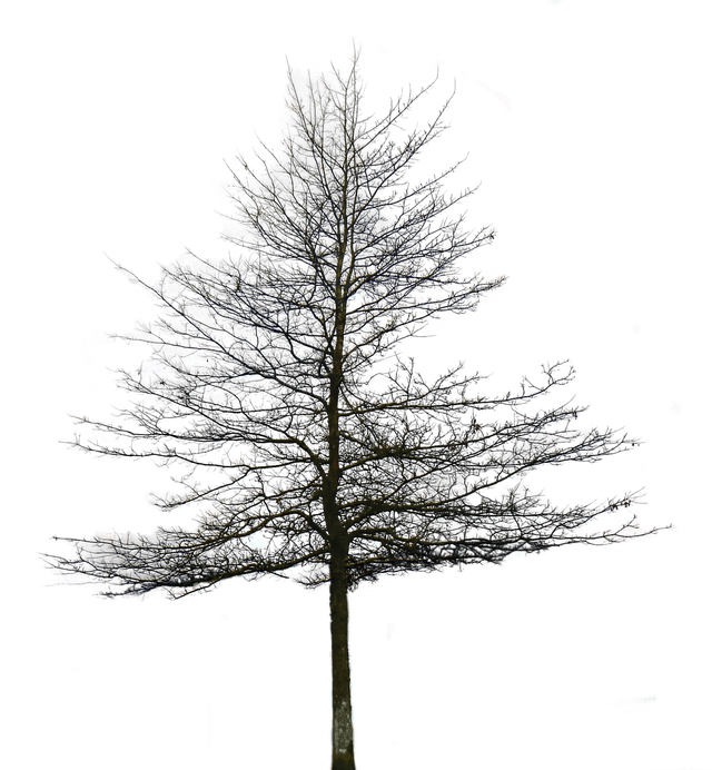 Architectural trees png. Tree images free