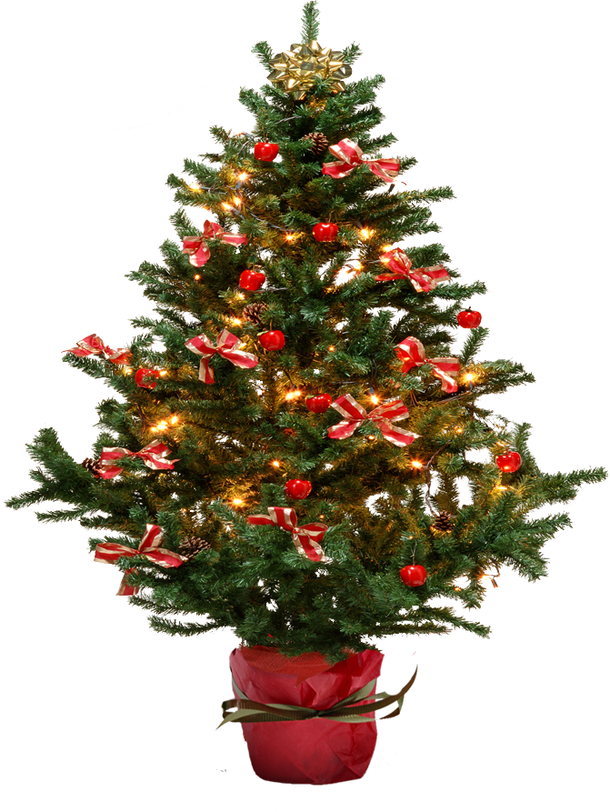 Christmas fir tree image. Pine trees png clip library stock