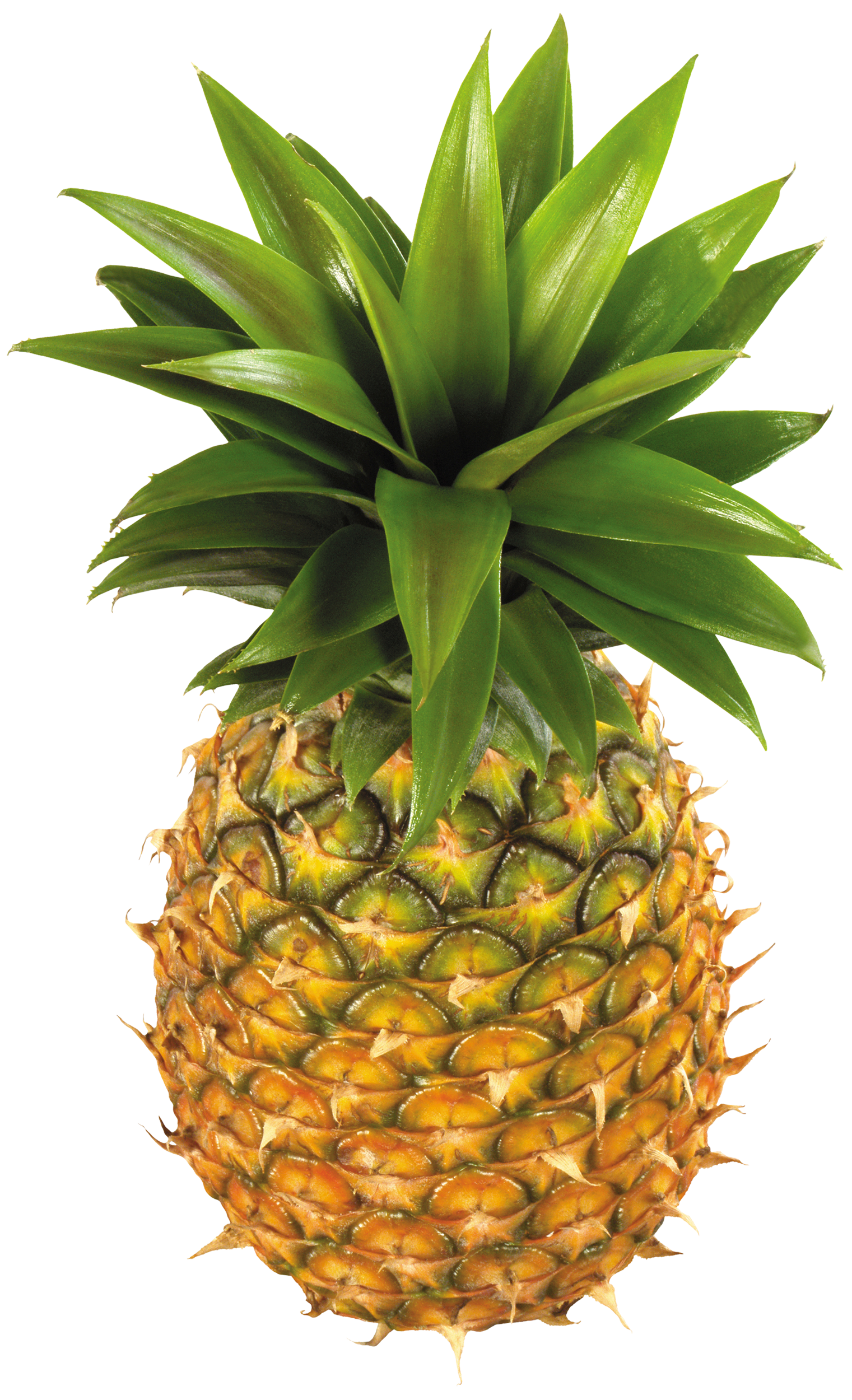 Pineapple clipart transparent. Typegoodies me fruit png