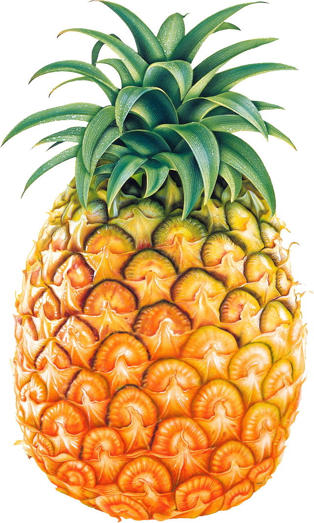 Pineapple clipart transparent. Black and white free