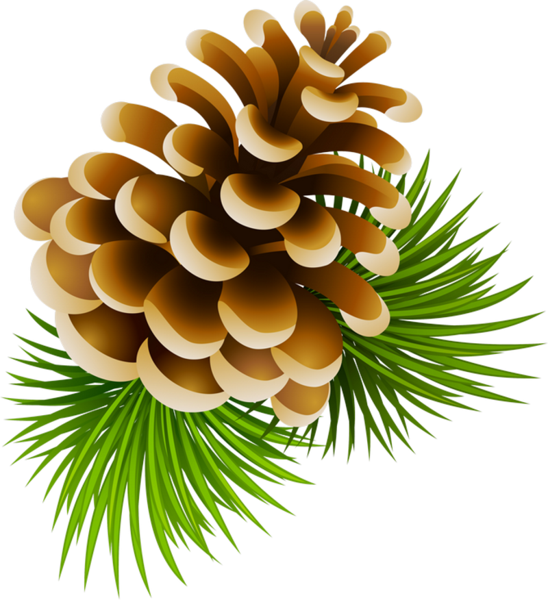 Christmas pine cone png. Pinecone nature clipart pinterest