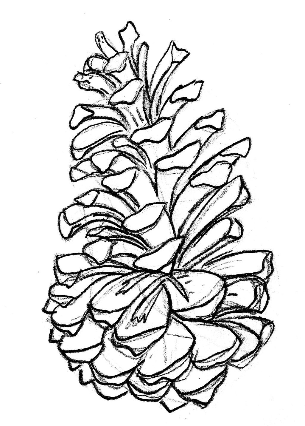 Pinecone clipart eastern white pine. Drawing at getdrawings com