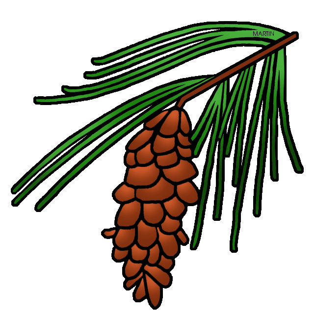 Pinecone clipart eastern white pine. United states clip art