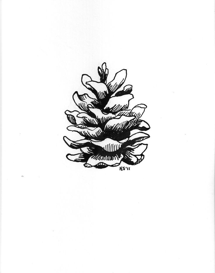 Pinecone clipart eastern white pine. Best pinecones images