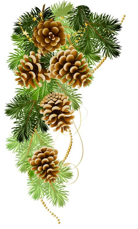 Pinecone clipart greenery. Image result for paintings