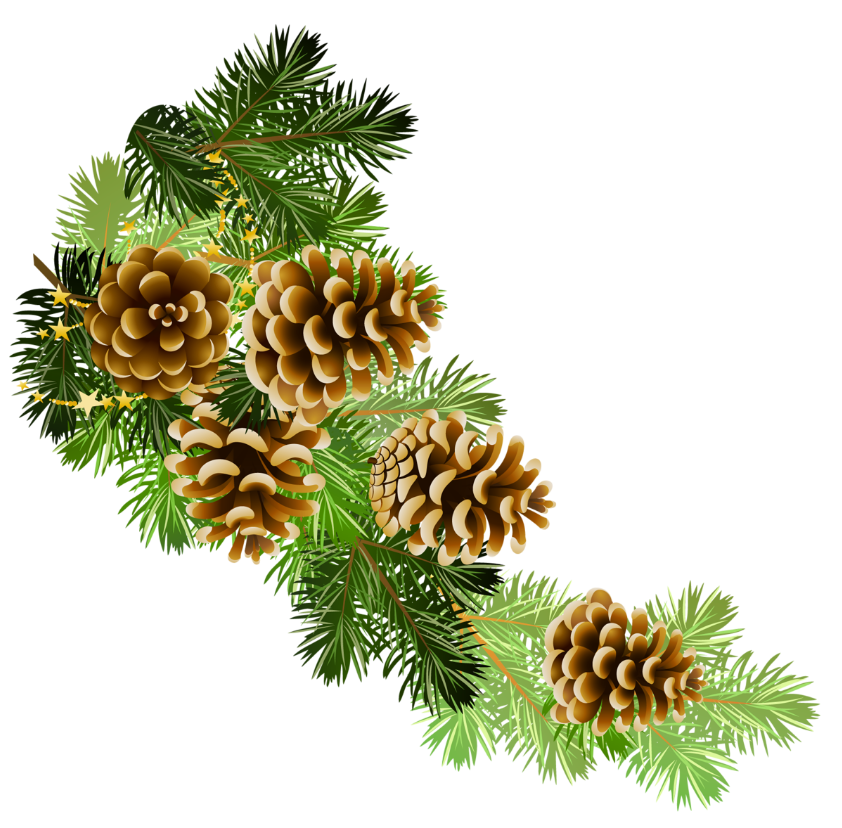 Pinecone clipart greenery. Pine and cones branch