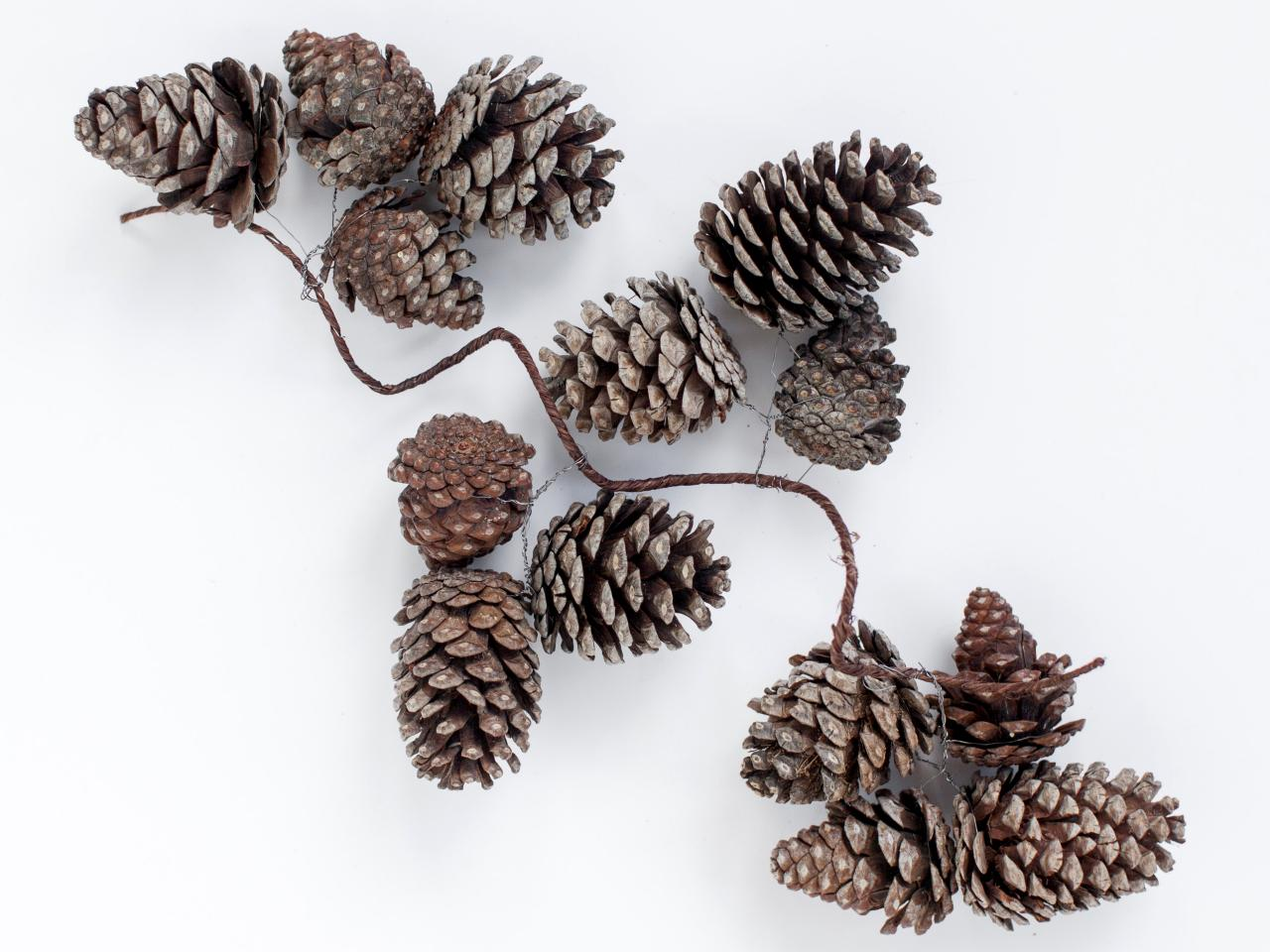 Pinecone clipart pinecone garland. Image of christmas pine
