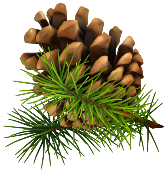 Pinecone clipart pinecone garland. Best of pine