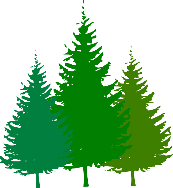 Pinetree vector forest tree. Pine silhouette at getdrawings