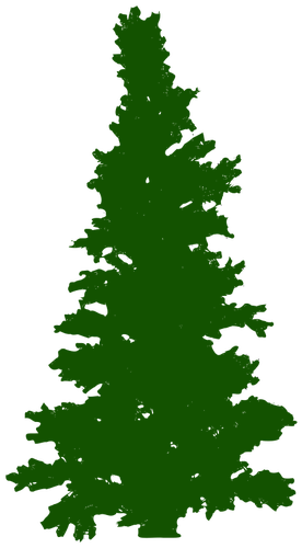 Pinetree vector pine norfolk. Coniferous tree silhouette at