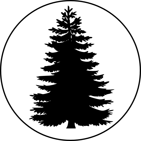Pinetree vector eastern white pine. Tree in a circle