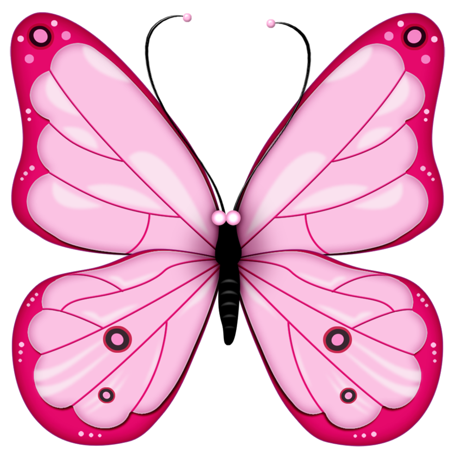 Pink butterflies png. Butterfly image