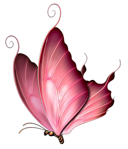 Pink butterfly png. Image mart