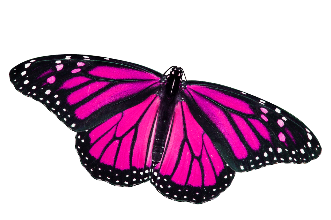 Pink butterfly png.