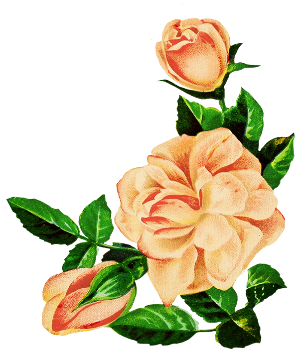 Pink drawing rose. Pictures at getdrawings com