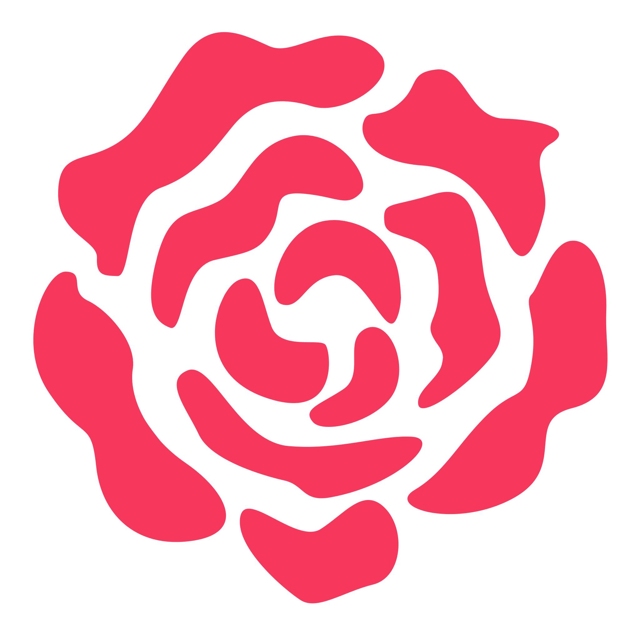 Pink drawing rose. F u background by