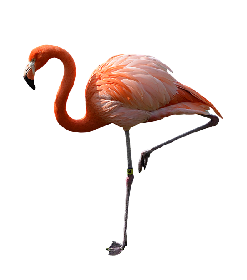Flamingo transparent small. Pink stock photo dsc