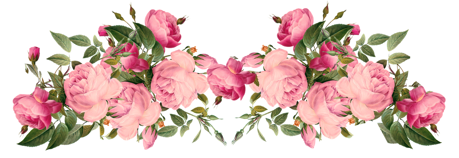 Pink flower border png. Rose borders free roses