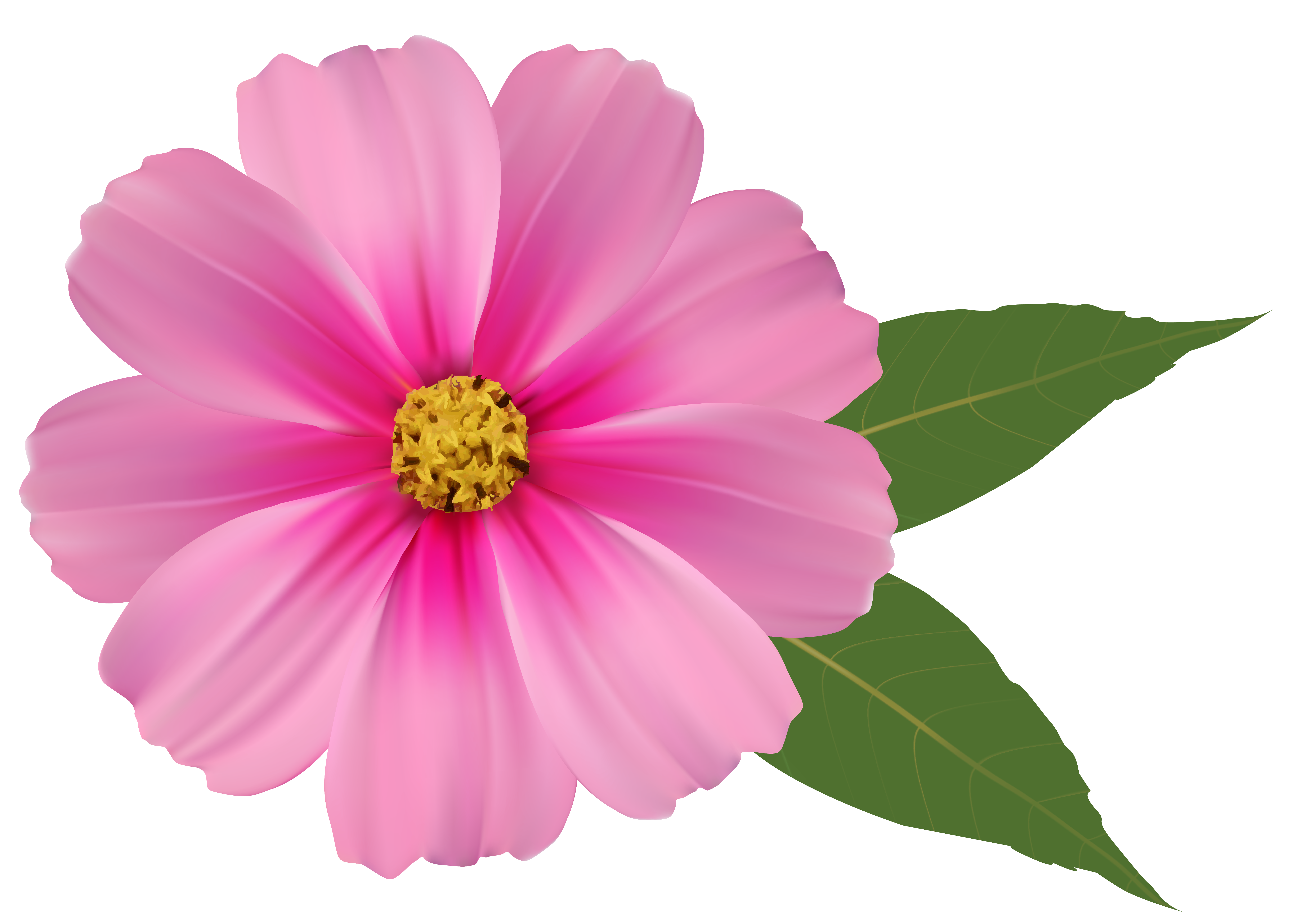 Pink flowers png. Flower image clipart gallery