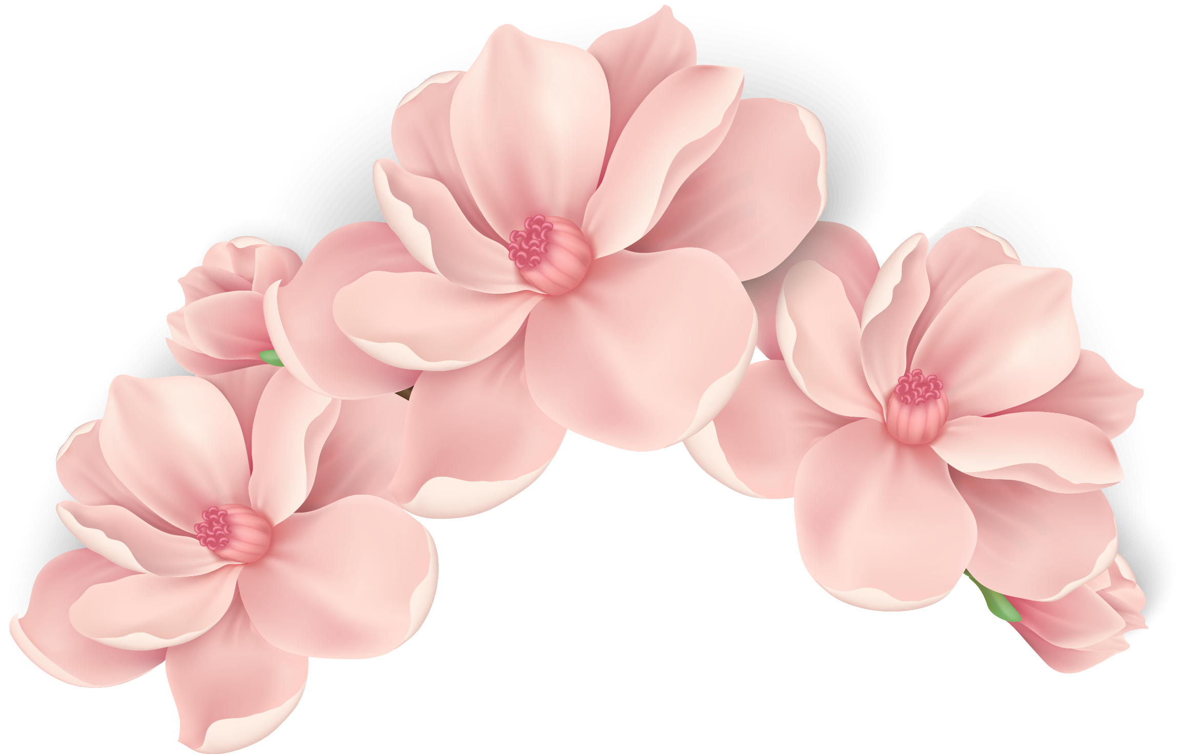 Pink flower vector png. Flowers hand painted transprent