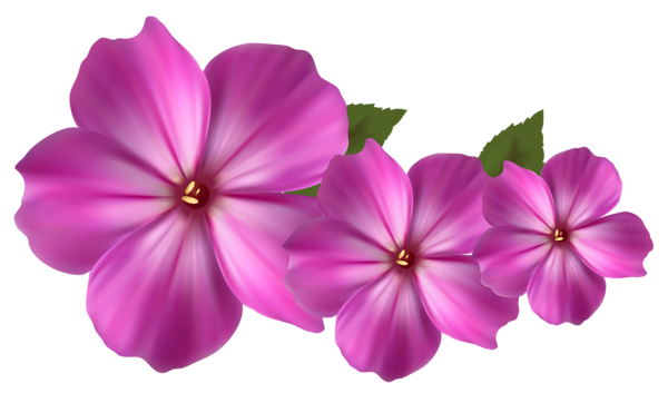 Pink flower vector png. Decor clipart beautiful flowers