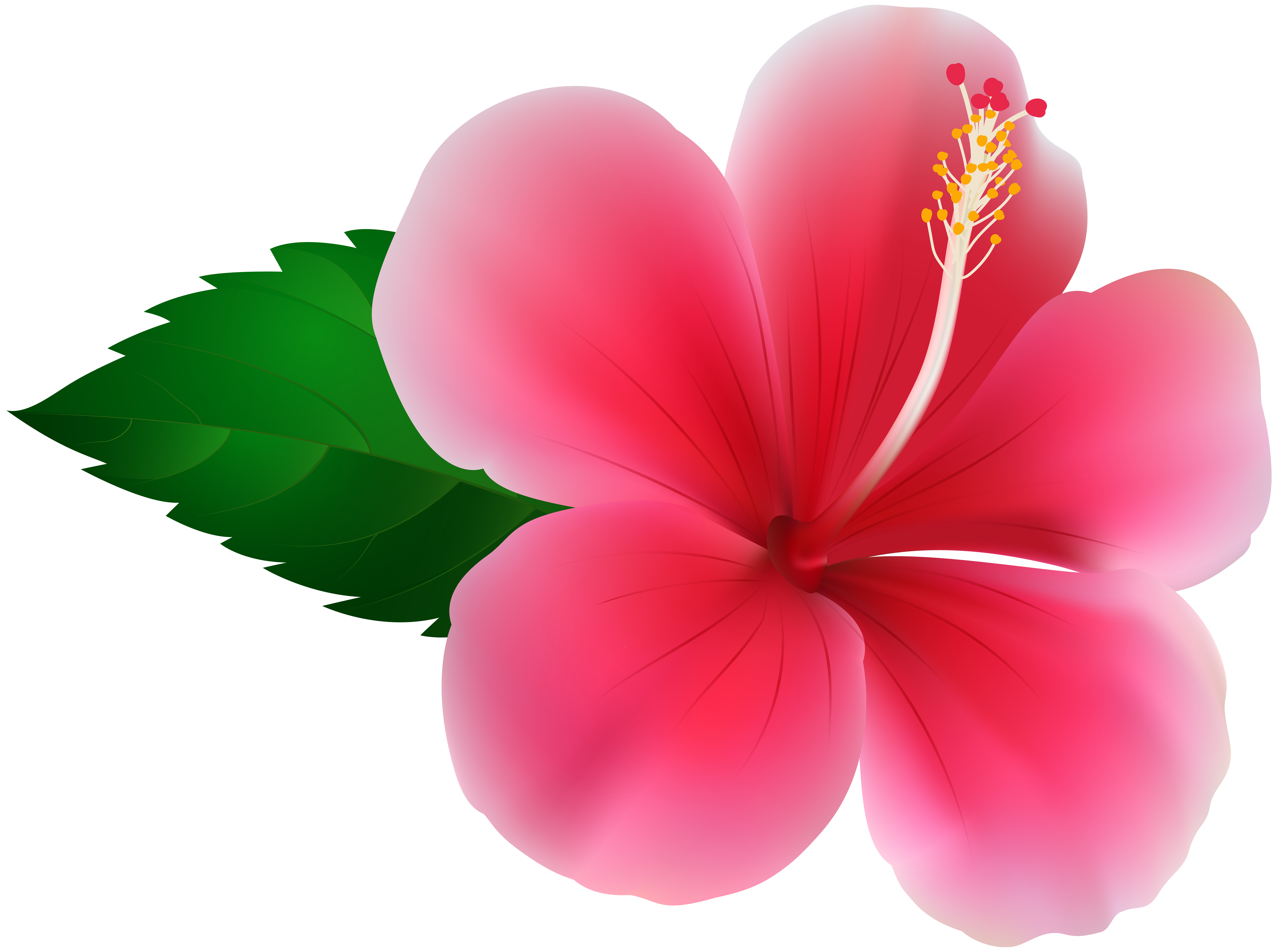 Pink hibiscus flower png. Clip art image gallery