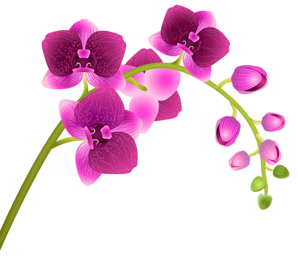 Orchid transparent high resolution. Flower png clip art