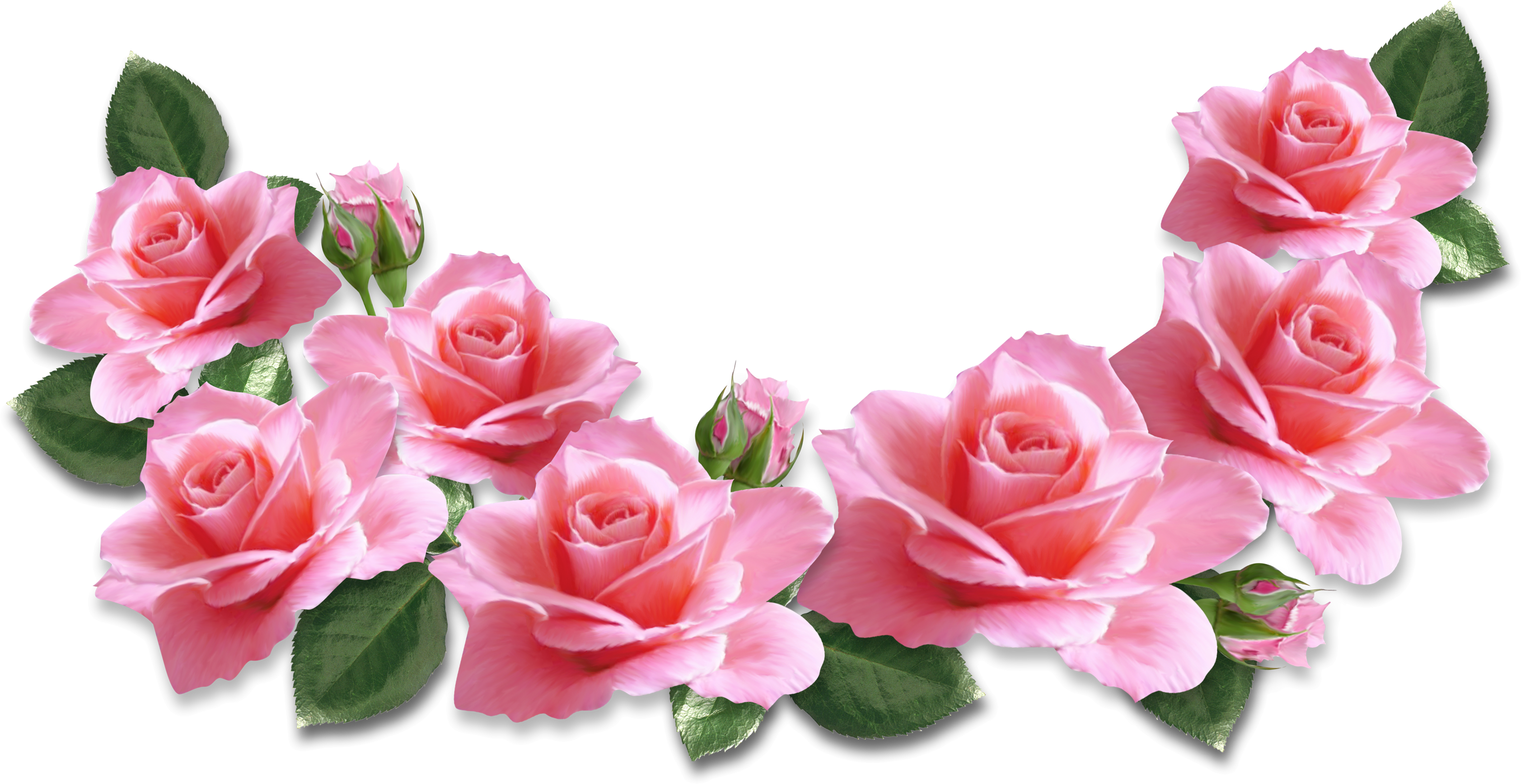 Rosas png. Pink roses decoration clipart