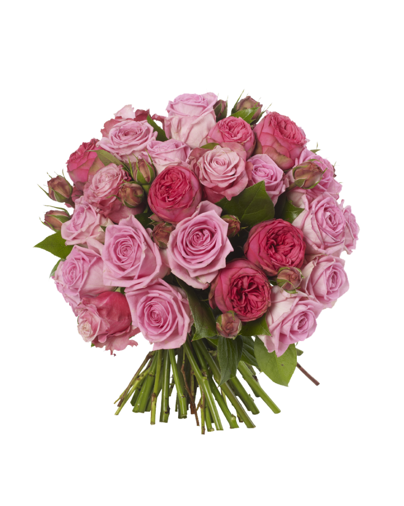 Bouquet vector light pink rose. Roses flowers png free