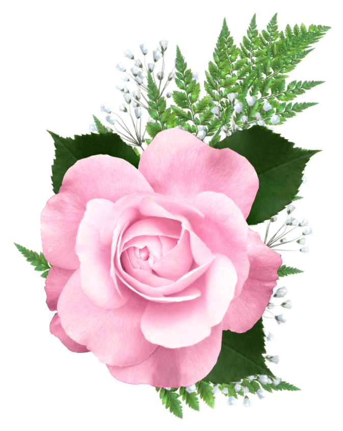 Roses clipart bed. Pink rose png transparent