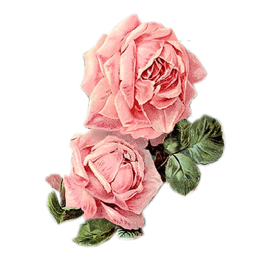 Pink roses vintage png. Paper crafts pieces for