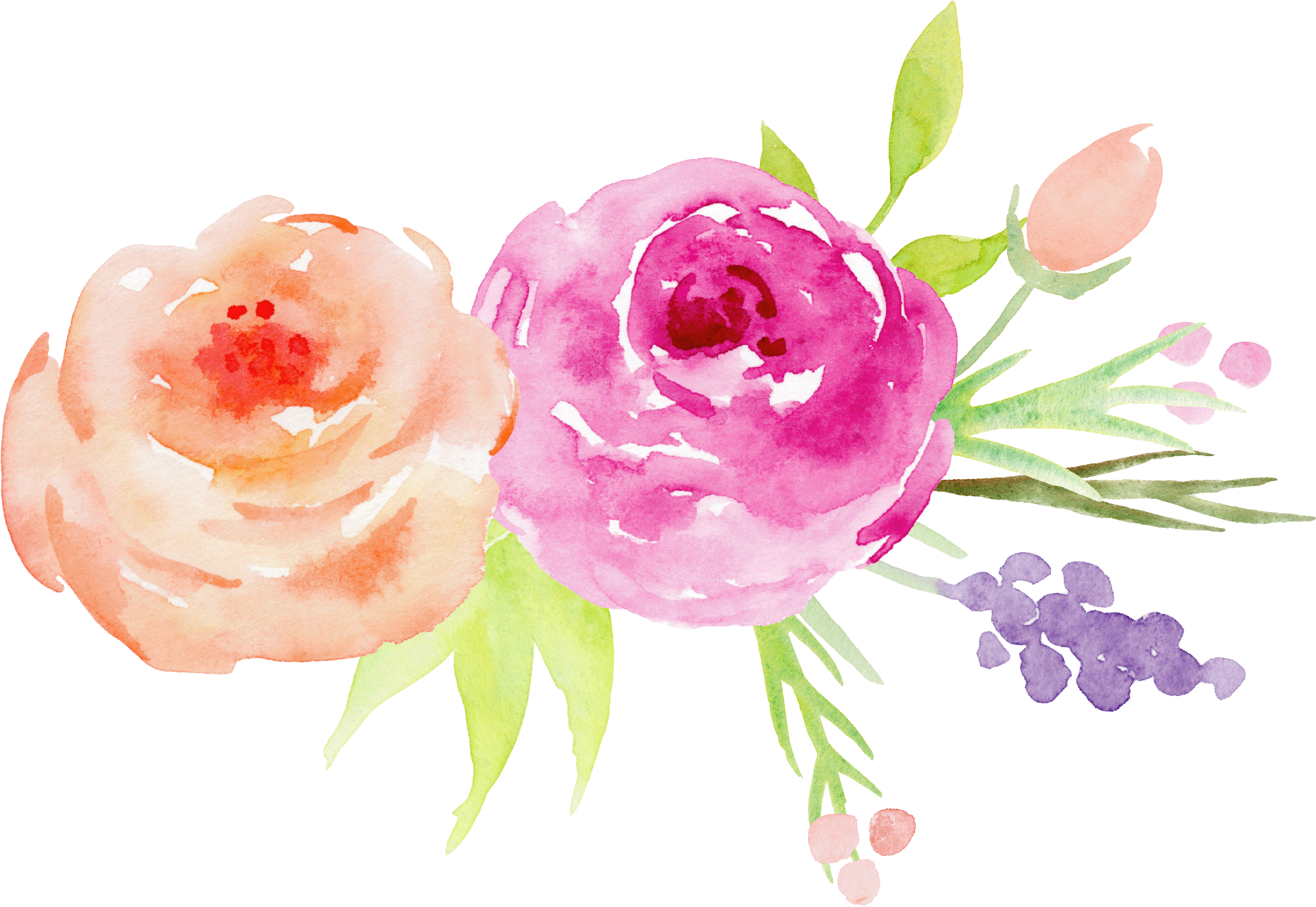 Watercolor rose png. Flower painting garden roses