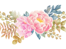 Flowers vector clipart psd. Pink watercolor flower png image black and white stock