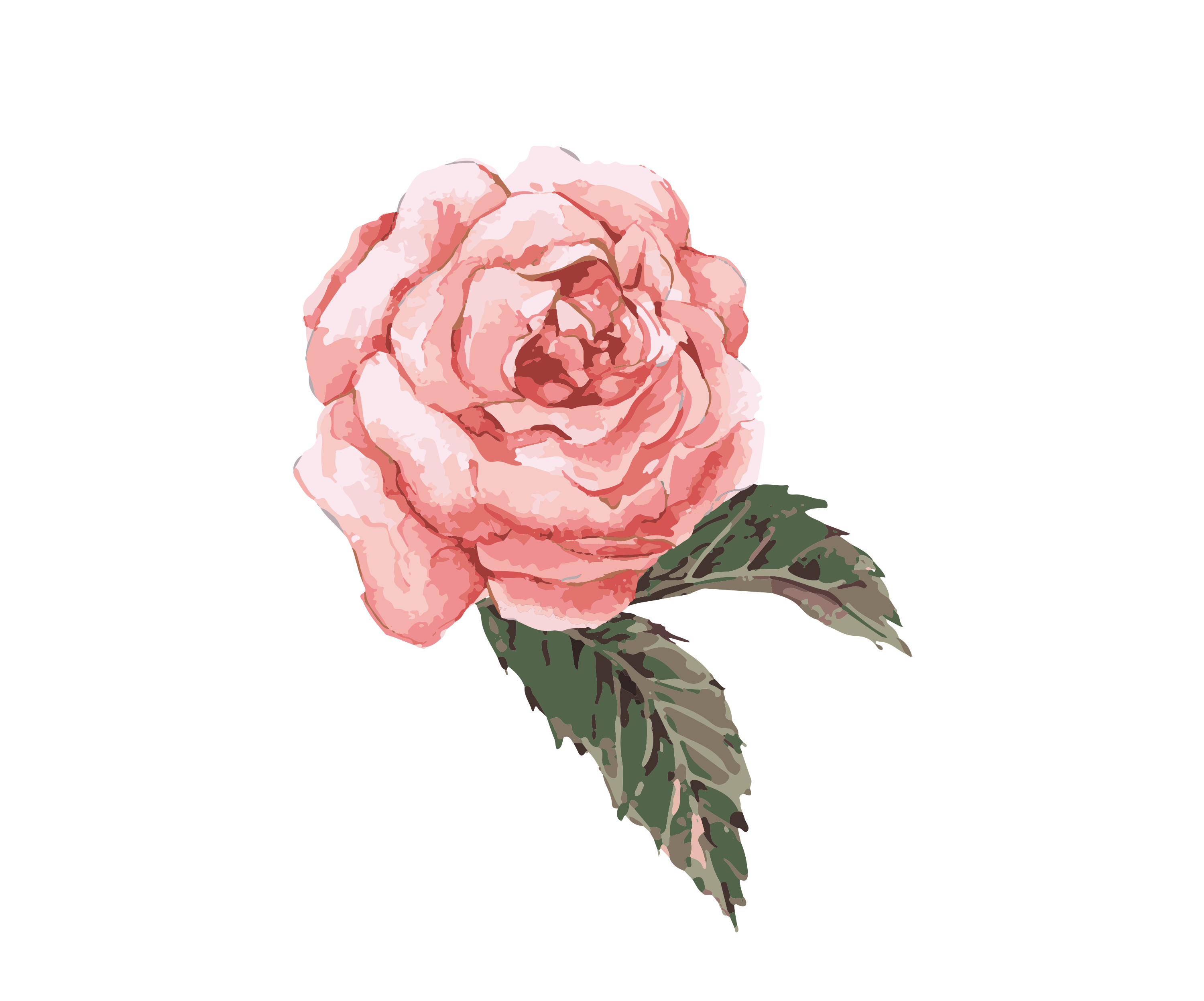 Watercolor rose png. Flower painting clip art