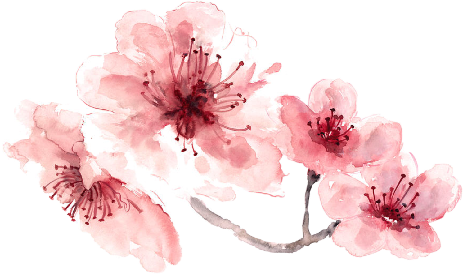Pink water color flower png. Watercolor painted freetoedit report