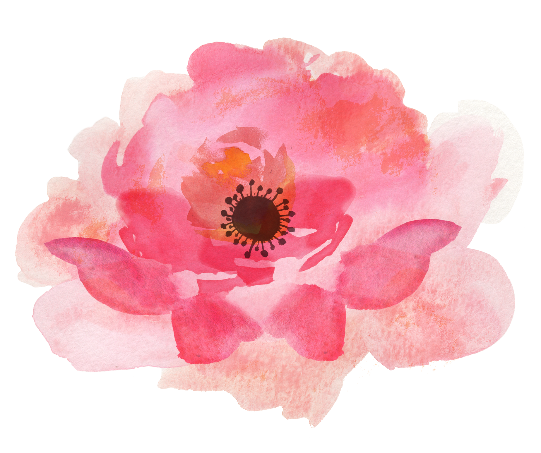 Water color flower png. Pink watercolor flowers high