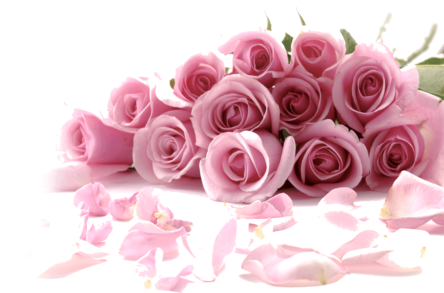 Pink watercolor roses png. Painting painted