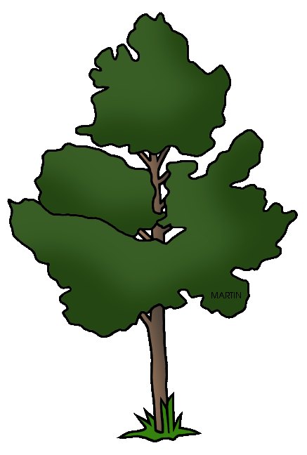 Pinon pine png. United states clip art