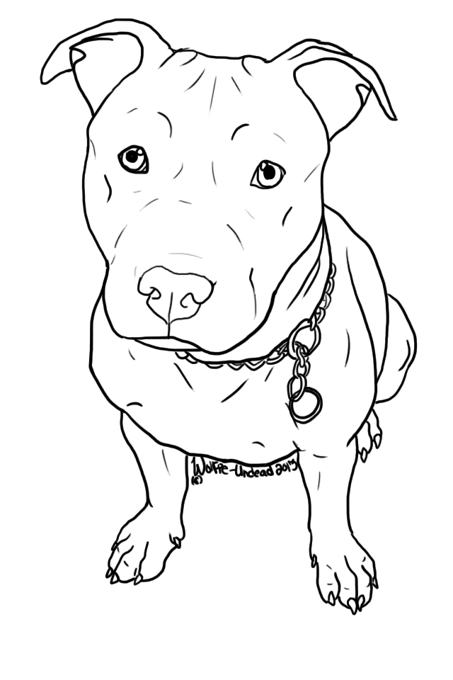 bully drawing dog