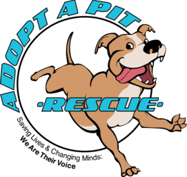 Pitbull clipart brindle dog. Adoptables adoptable dogs
