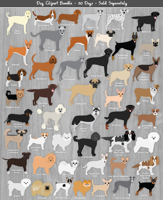 Pitbull clipart brindle dog. Clip art pitbulls pet