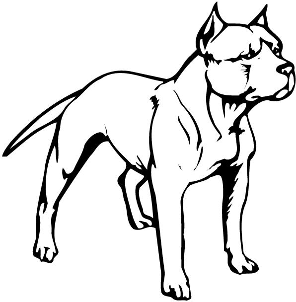 Pitbull clipart outlines. Drawing at getdrawings com