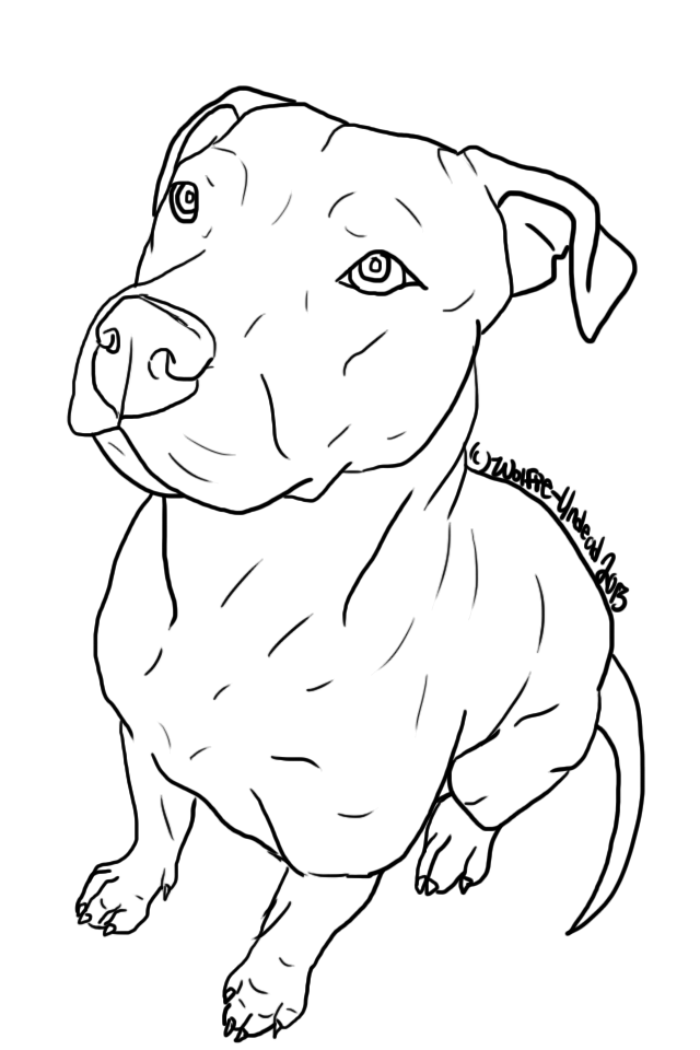 Pitbull clipart outlines. Free to use pit