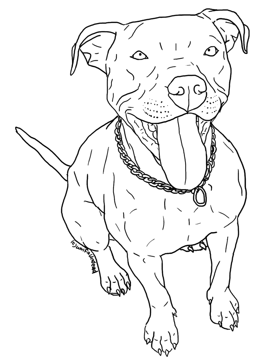 Pitbull outline png. Puppies drawing at getdrawings