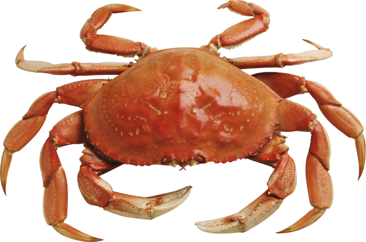 Pixelated crab png. Max on twitter rt