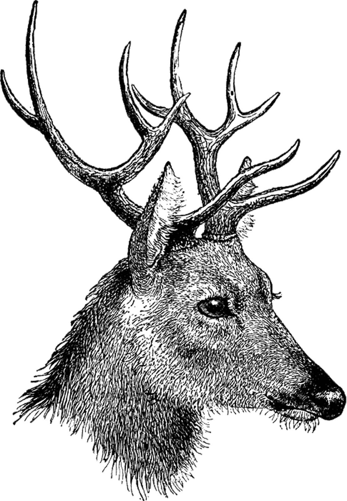 raindeer drawing pencil
