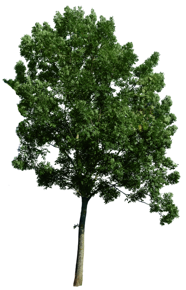 Plan view trees png. Use as a tree