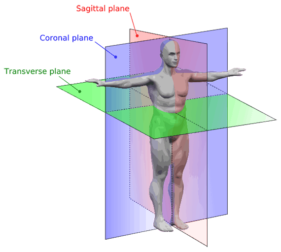Planar drawing anatomy. Anatomical terms meaning regions